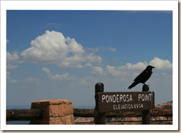 Raven at Ponderosa - Bryce NP