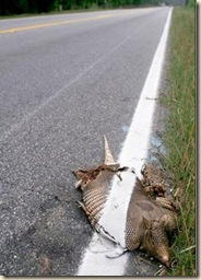 road stripe armadillo