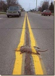 road-stripe-possum