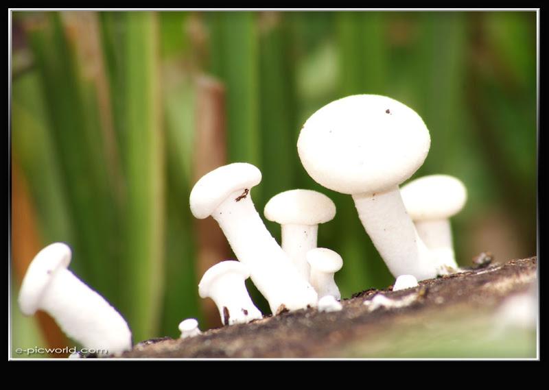 Mushrooms and fungi photo