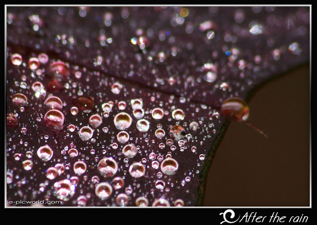 rain drops wallpaper picture