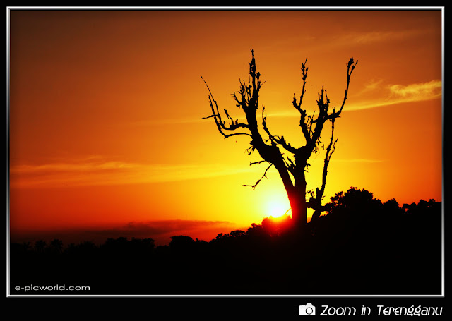 Sunset and tree silhouette