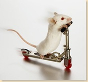white-mouse-on-skate-board