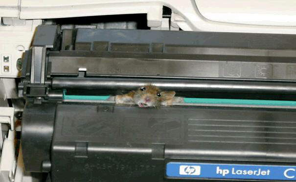 Technical support...Mouse and Printer