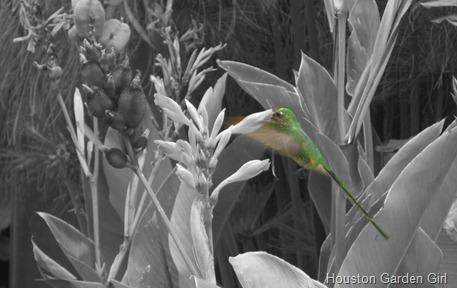 ColorSplashImage(3)