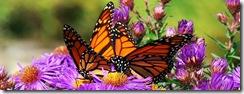 butterflyblogweb