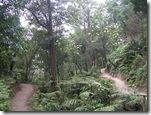 Gunung Tangkuban Perahu (6)