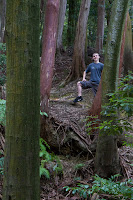 Dylan in the woods of Nanzen-ji Photo