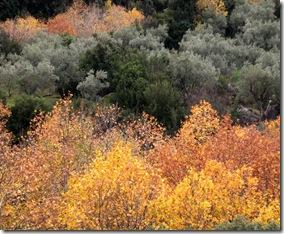 autumn2008