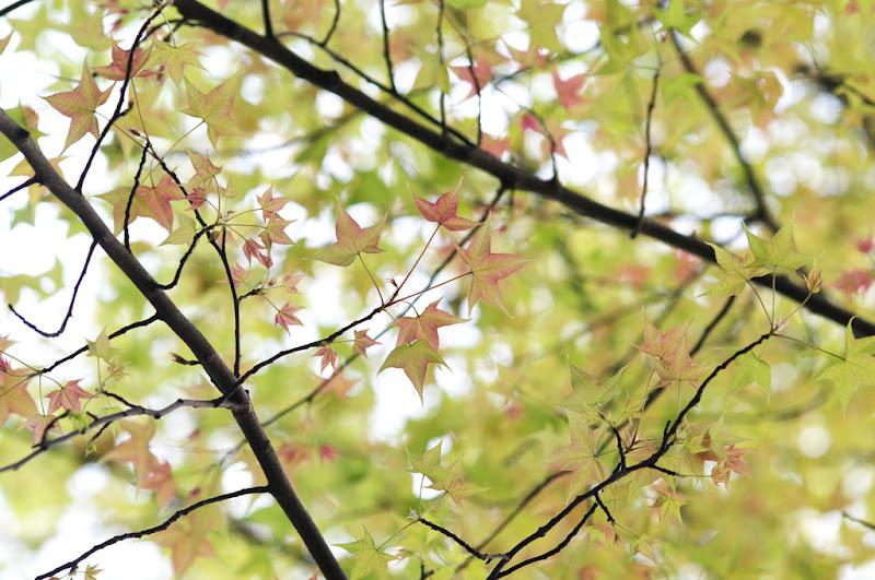 春楓-台北