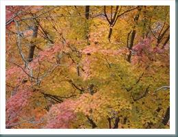 Ashiyasu Fall 2008-11-15 015