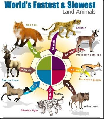 land_animals_01