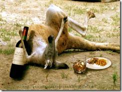 Kangaroo Funny Photoshop by mrm