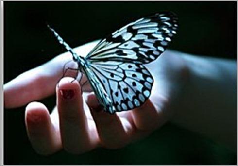 mariposa-en-mano
