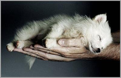 animal,hands,nature,sleeping,cute,dog-43adfe26dc88d3dba552c9b416267265_h