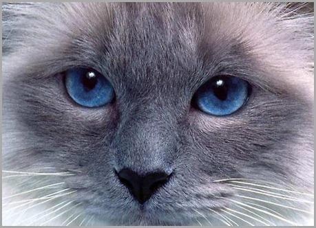 1292135692_blue5