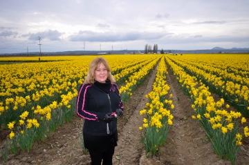 Laura Daffodils