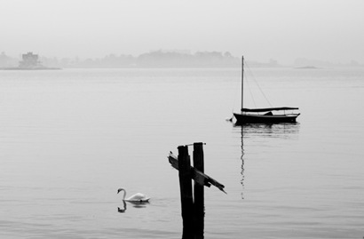 Swan and Sailboat in the Mist - 2