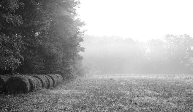 Hay Bails in a Foggy field