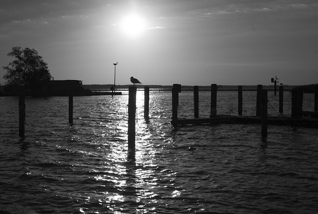Seagull on Piling Saint George's Island