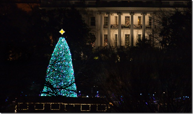 National Christams Tree at Night