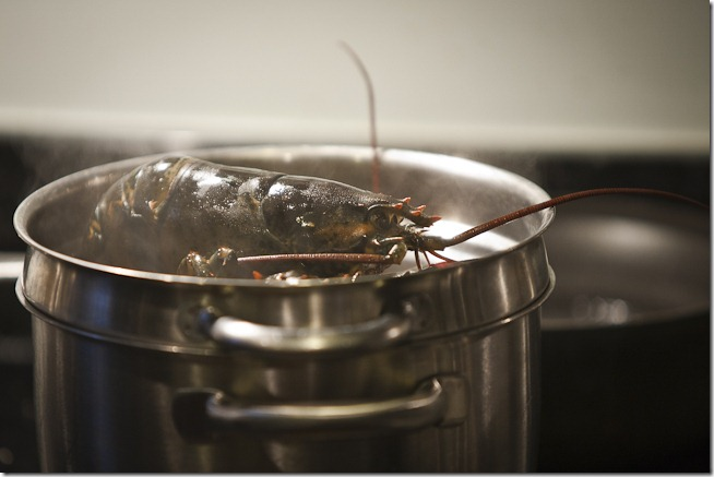 Lobsters in the Pot