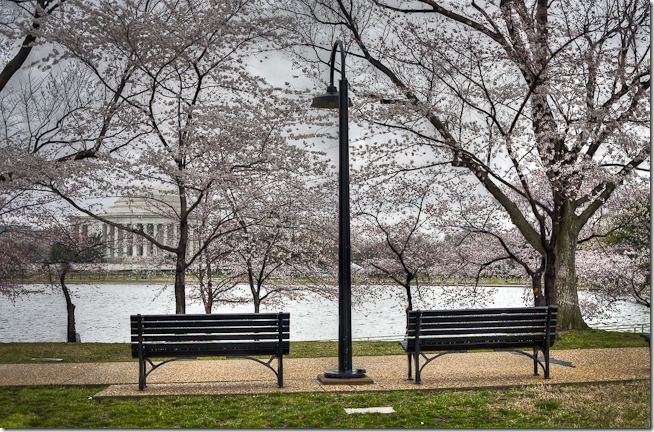 Cherry Blossoms on the Tidal Basin-1