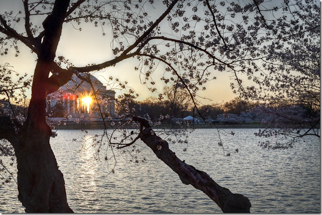 Cherry Blossoms with Sunrise through the Jefferson Memorial