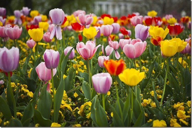 Spring Flowers at the U.S. Capitol Building