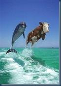 dolphin cow jump