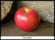 Apple Fireside