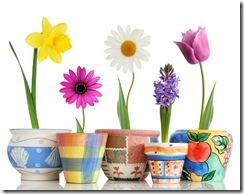 Spring in pots