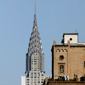 Chrysler Building by Alec Halstead - Buildings & Architecture Office Buildings & Hotels