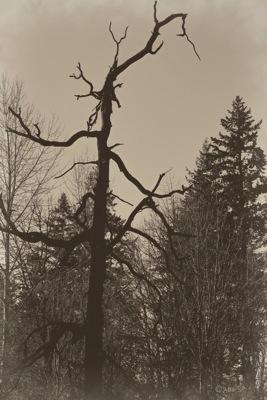 HauntedTree-Heartland.jpg