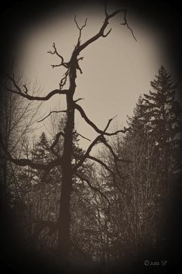 HauntedTree-HeartlandBurn.jpg