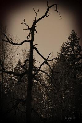 HauntedTree-SepiaBurn.jpg