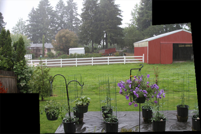 GardenInTheRain-2010-06-7-08-36.jpg