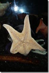 Denver aquarium 2011