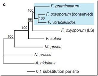 fusarium2