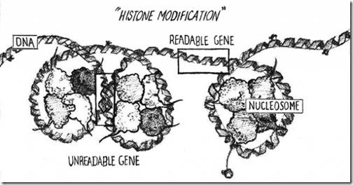 epigenetic_step1