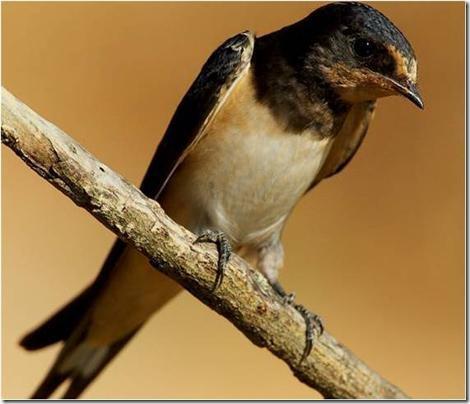 bird-chernobi