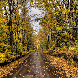 Covered Road by Jeff Ewig - Landscapes Forests ( fall, color, colorful, nature )