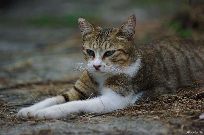 桌腳下的貓樂園