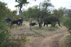 2008-03-08 Africa 050