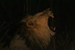 2008-03-07 Africa 067