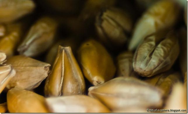 macro-seeds