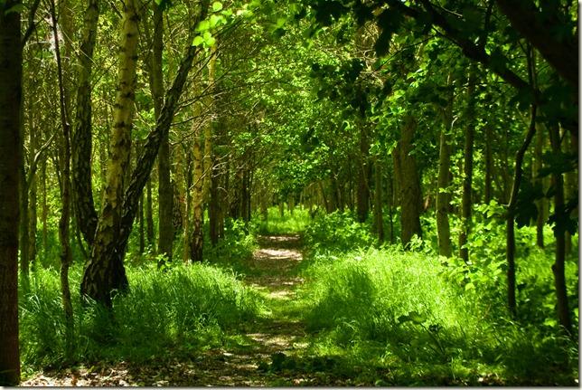 gree wood path-1