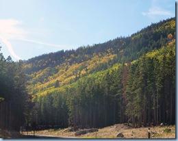 Rocky Mountain National Park Aspen 4