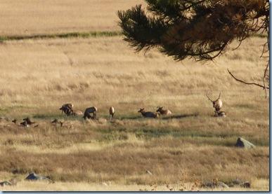 Rocky Mountain National Park Elk 2