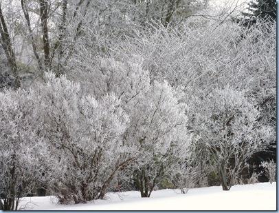 Hoar Frost 1 Jan 17, 2010